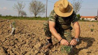 Άλλοι μαζεύουν ελιές, άλλοι κόβουν ξύλα, κάποιοι άλλοι φυτεύουν και σπέρνουν…