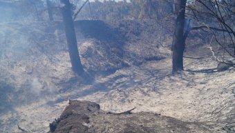Πυρκαγιά μεταξύ Καλαμωτής - Κώμης