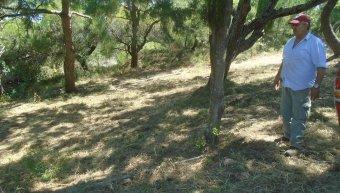 Καθαρισμός του δάσους του Προφήτη Ηλία στα Θυμιανά