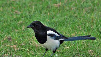 Προσοχή στα πουλιά