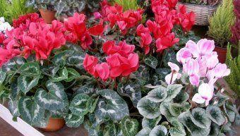 λουλούδια_χειμώνα