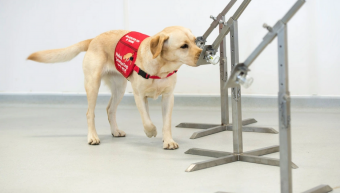dog_training_for_coronavirus