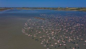 flamingo-xalkidiki