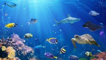 θαλάσσια ζωή