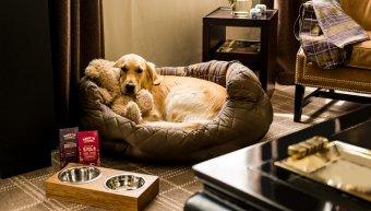 Σκύλος σε pet-friendly ξενοδοχείο