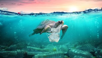 θαλάσσια χελώνα, πλαστική ρύπανση