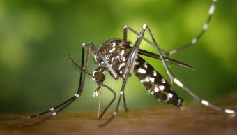 Κουνούπι