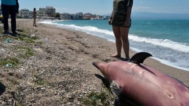 Το νεκρό δελφίνι