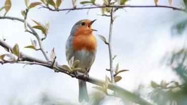 bird_chirping