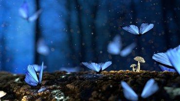 butterflies-mushroom-plants-macro-forest-bokeh