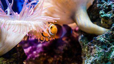 Κοραλλιογενής ύφαλος