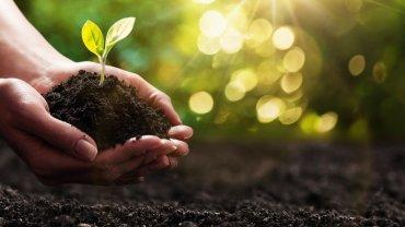 χέρια γυναίκας, φυτό, χώμα, φως