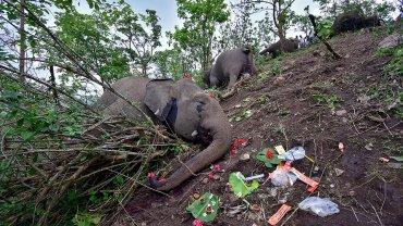 Φωτ: REUTERS/Anuwar Hazarika