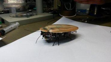 ρομπότ-κατσαρίδα