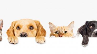 σκύλοι, γάτες