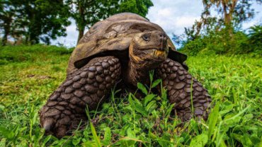 giant-xelona-galapagos