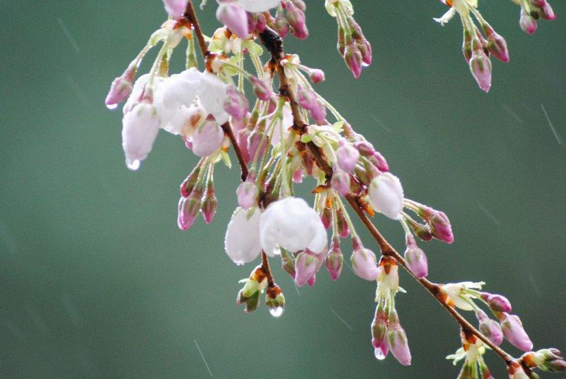 Μάης μήνας και βροχή δεν είναι κάτι συνηθισμένο