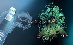 bacteria_eats_plastics
