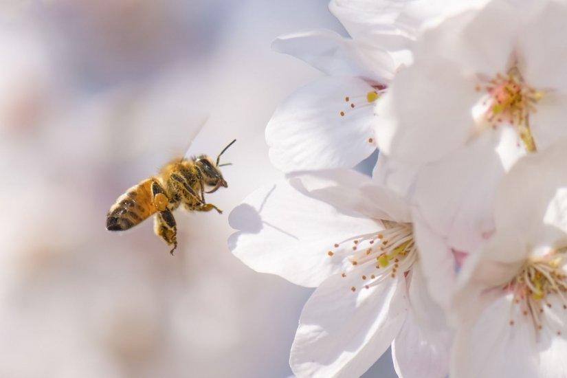 λουλούδια, μέλισσα