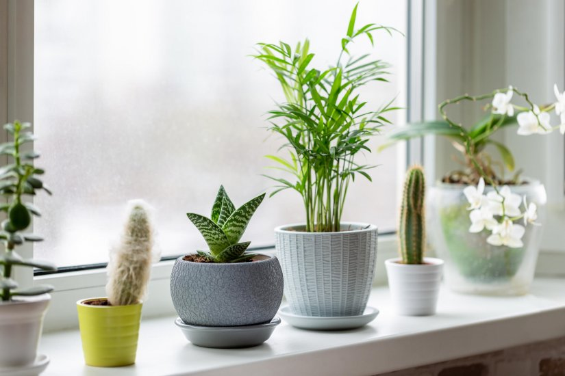 home_plants