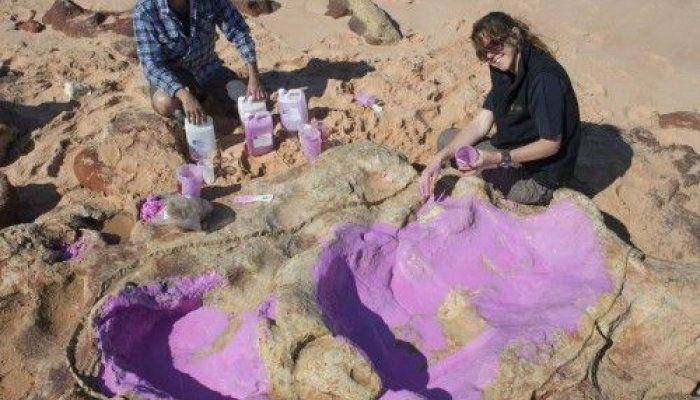 Ορισμένα από τα αποτυπώματα των δεινοσαύρων φτάνουν ακόμη και τα 1,7 μέτρα σε μήκος
