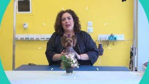 Project Happiness: Πότε κουρεύουμε τα σκυλιά μας απο την Λένια Σταμούλη