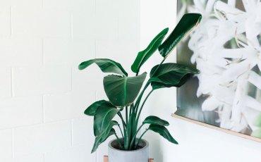 φυτό εσωτερικού χώρου