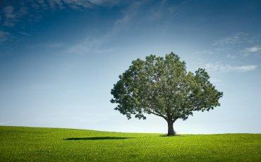 μοναχικό δέντρο
