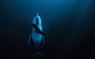 whale_image