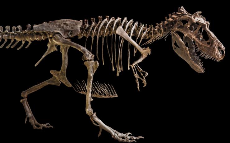σκελετός δεινοσαύρου
