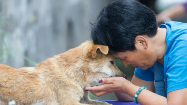 shenzhen_china_city_to_ban_eating_cats_and_dogs