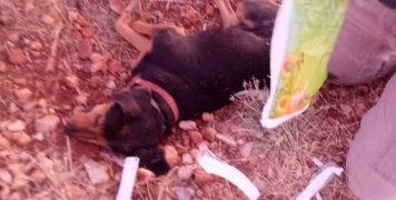 Κανονικά τέτοιες αποκρουστικές φωτογραφίες δεν πρέπει να ανεβαίνουν αλλά επειδή ο κόμπος έχει φτάσει στο χτένι για αυτό και τις ανεβάζουμε. Ο σκύλος νεκρός και δίπλα του τα αποδεικτικά της αγωνιώδους προσπάθειας του κυνηγού να τον βοηθήσει, ατροπίνες, κ.α