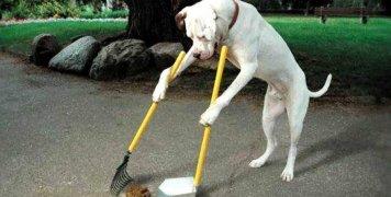 Υποχρεώση των κηδεμόνων ζώων να μαζεύουν τις ακαθαρσίες τους