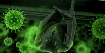 bat_coronavirus