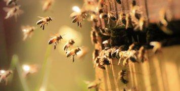 μέλισσες, κυψέλη