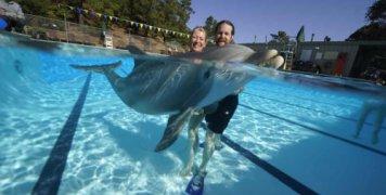 rompotika-delfinia